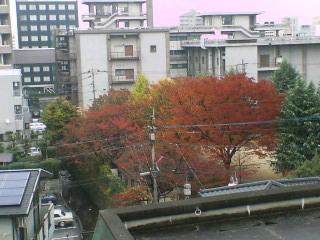 image/piyo2-2005-11-27T12:34:03-1.jpg